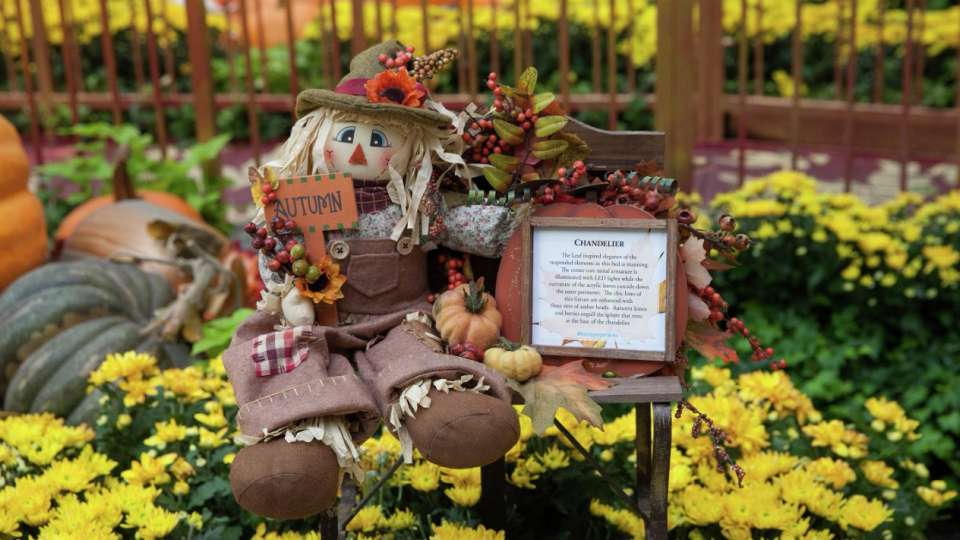 See the 2017 Fall Conservatory where the smell of pumpkin spice overtakes your senses.