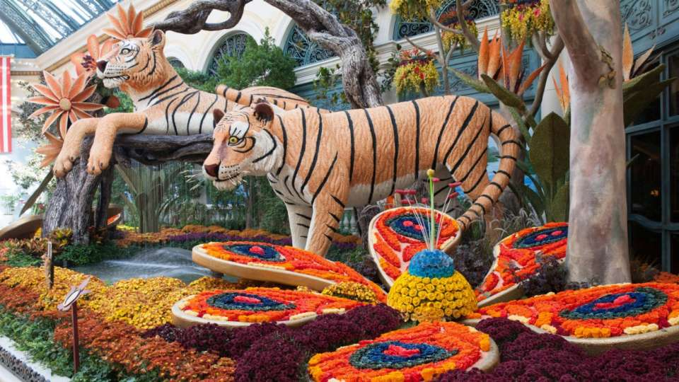 An up close image of the tigers.