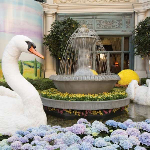 A pair of swans in the Conservatory at Bellagio.