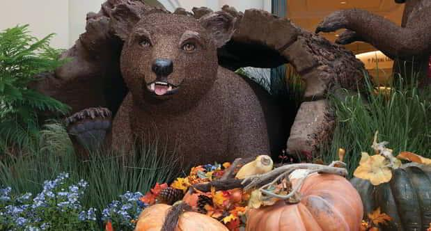 Close up of a single bear and pumpkin patch display at the Bellagio Conservatory.