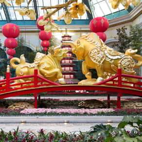 This is year of the Ox display at the Bellagio Conservatory.