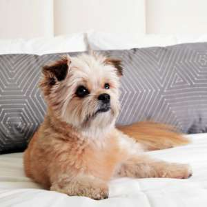 Delano has a selection of dog friendly rooms.