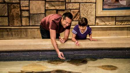 Reach into our touch pool and feed our beautiful stingrays and ancient horseshoe crabs through this VIP experience.