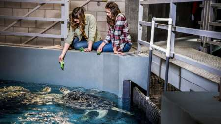 Our sea turtle interactive feeding program offers an opportunity to get up close and personal with the aquarium's gentle giants.