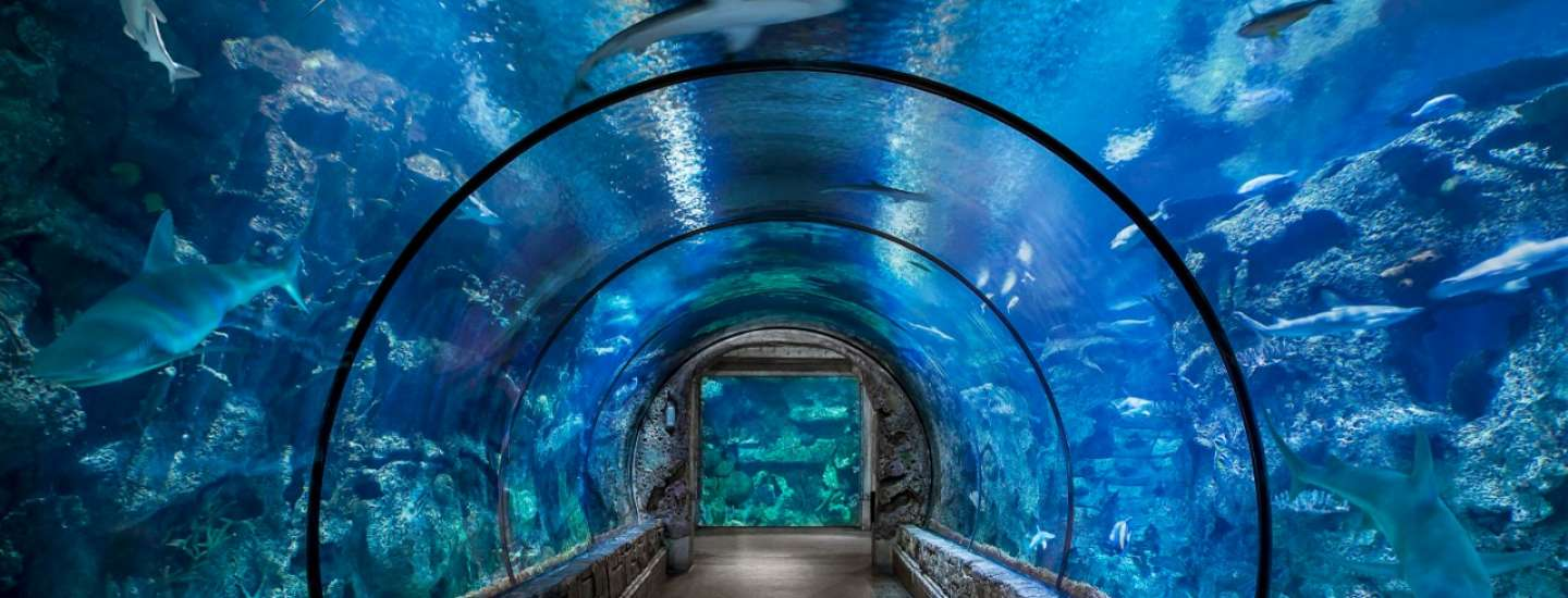 Our Shark Reef tunnel offers a full view of our animal habitat that has over 2,000 unique animals.