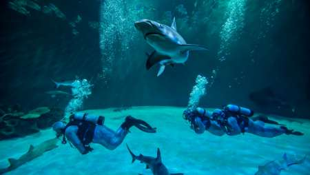 This unique exhibit gives you the opportunity to swim with a higher concentration of exotic sharks that you'll ever find in the wild.