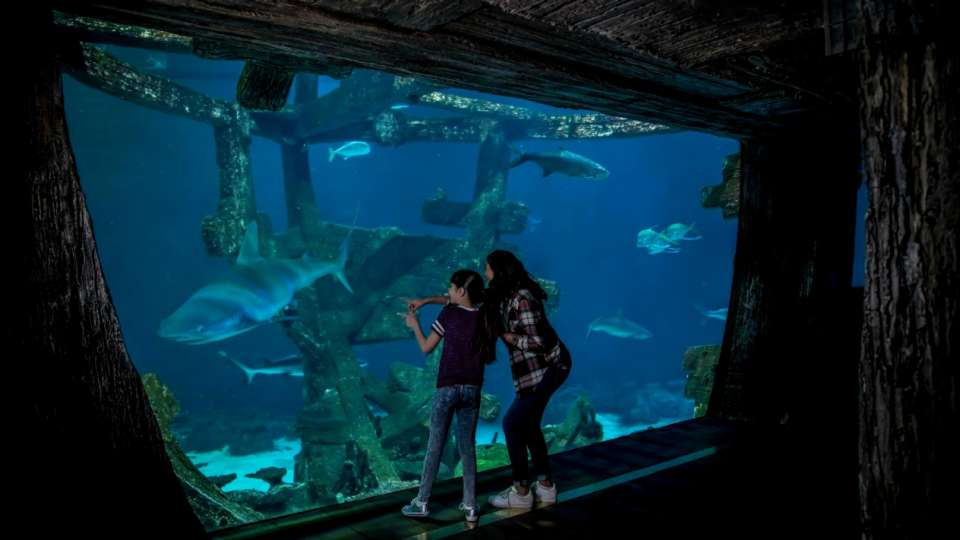 Visit the shipwreck exhibit at Shark Reef Aquarium to see exotic sharks and a variety of fish.
