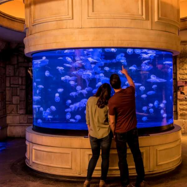 The jellyfish exhibit at Shark Reef Aquarium offers a mesmerizing experience of one of the ocean's most fascinating organisms.