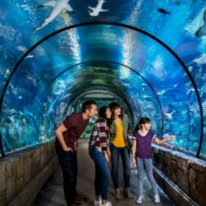 Our Shark Reef tunnel offers a fantastic view of our animal habitat featuring over 2,000 unique species.