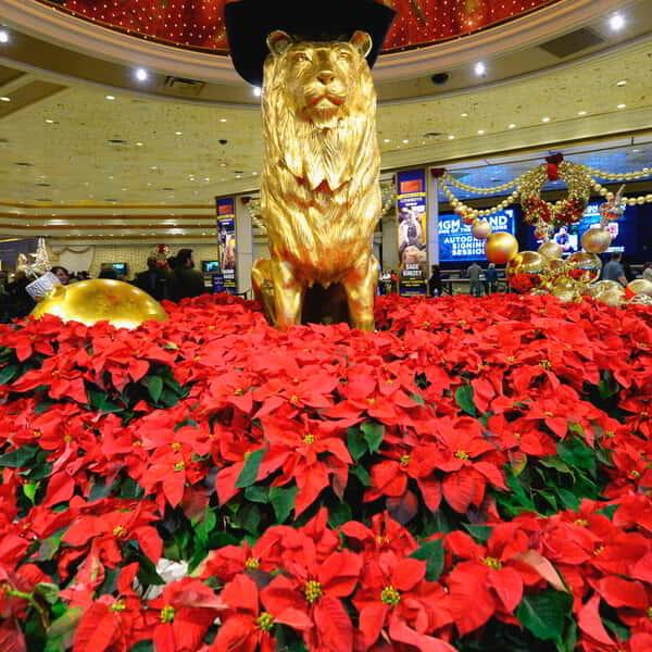 NFR 2015 Autograph Signing Lion and Flowers