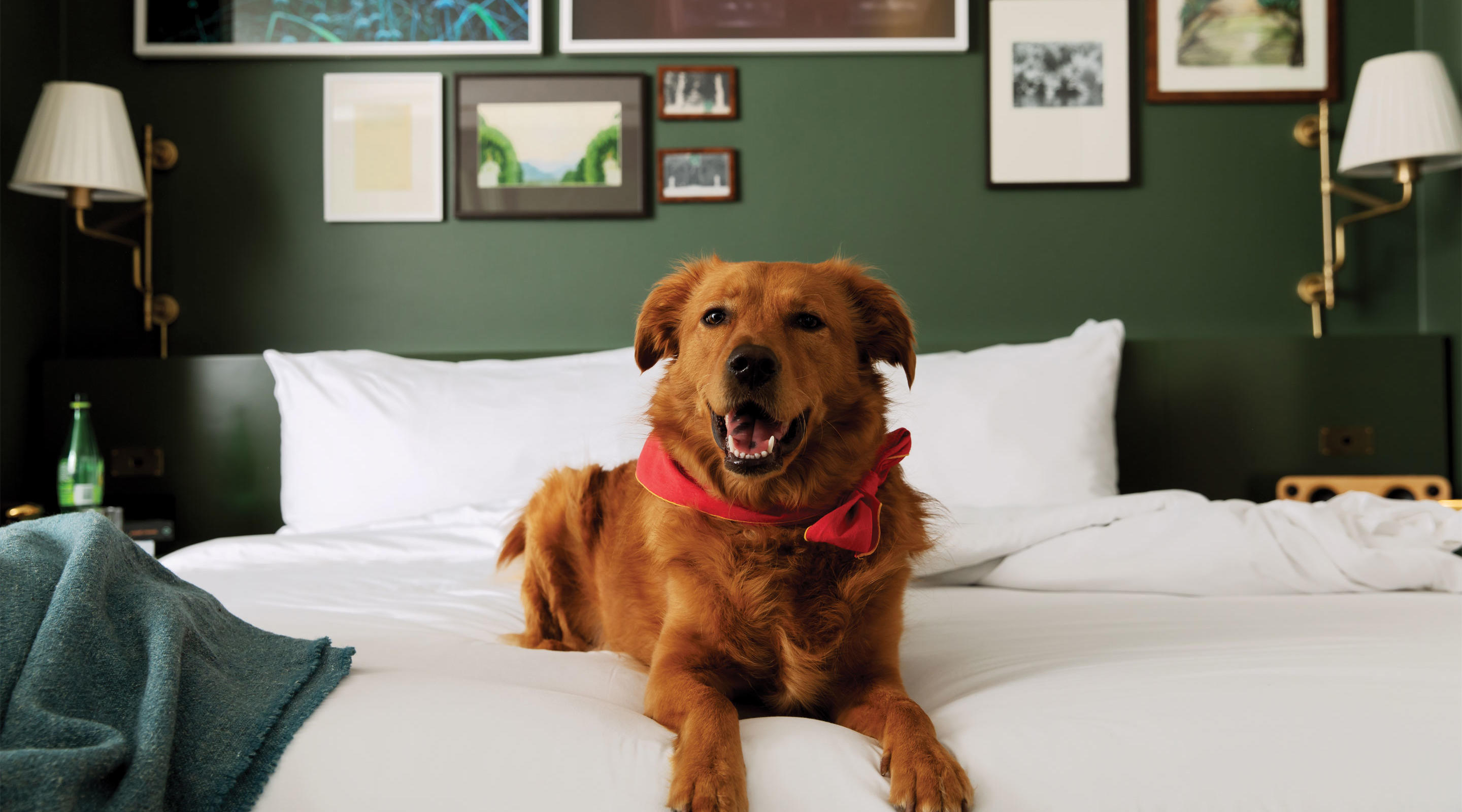 Dog sitting on the bed in a Park MGM pet friendly room.