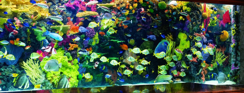 Mirage Aquarium