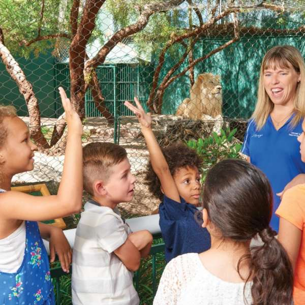 An educator leads children on a guided tour of the Lion exhibit.