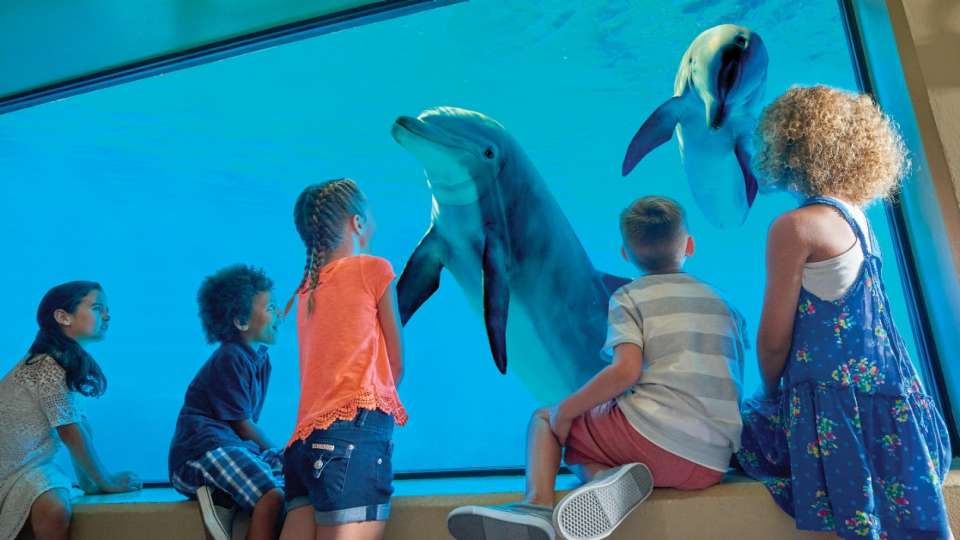 Get an up close look at the amazing dolphin habitat.