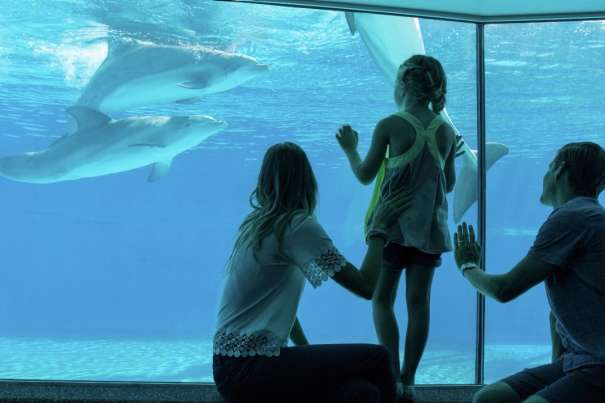 A family in the underwater viewing area looking at dolphins.