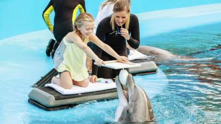 Witness the artistic talents of our dolphins as you work together to create a truly unique piece of art