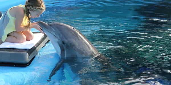 mirage-secret-garden-dolphin-habitat-painting-kiss