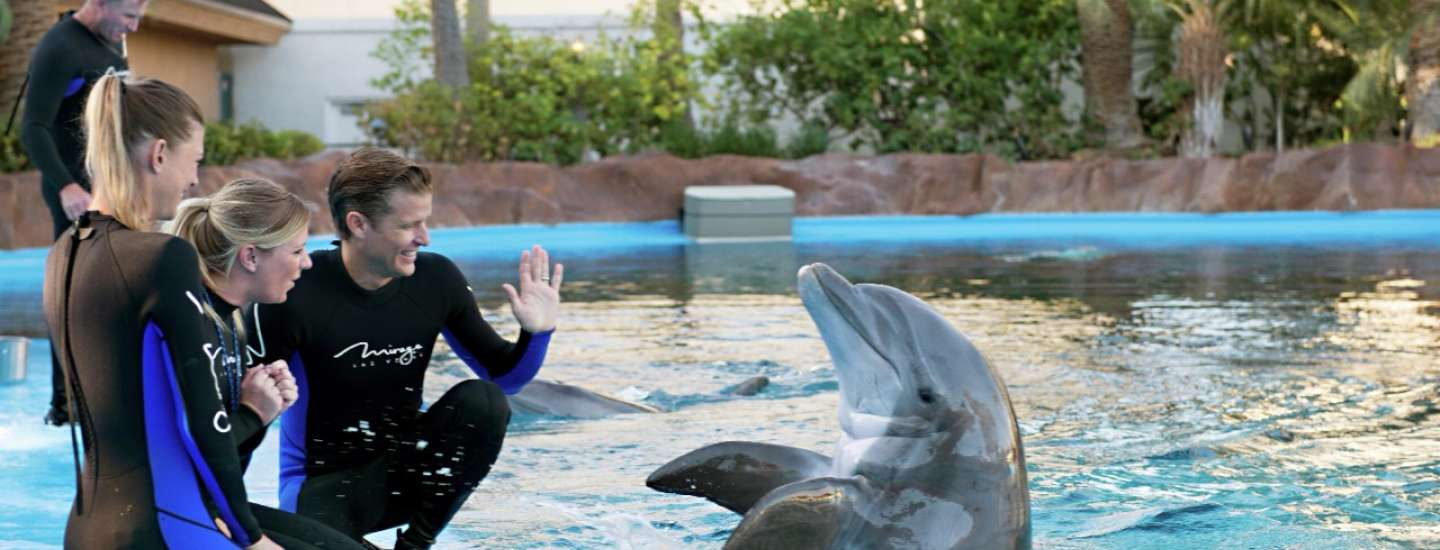 mirage-secret-garden-dolphin-habitat-trainer-waving