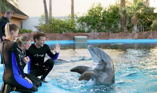 mirage-secret-garden-dolphin-habitat-trainer-waving.tif.image.550.325.high