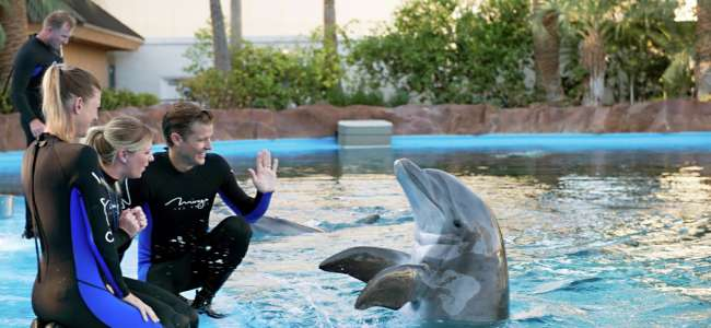 mirage-secret-garden-dolphin-habitat-trainer-waving.tif.image.650.300.high