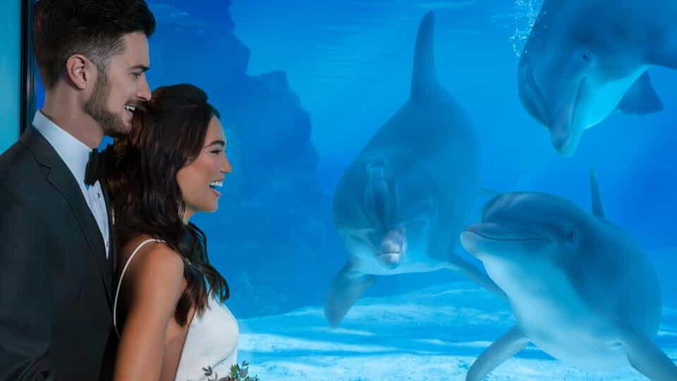Mirage Weddings Couple meeting Dolphins