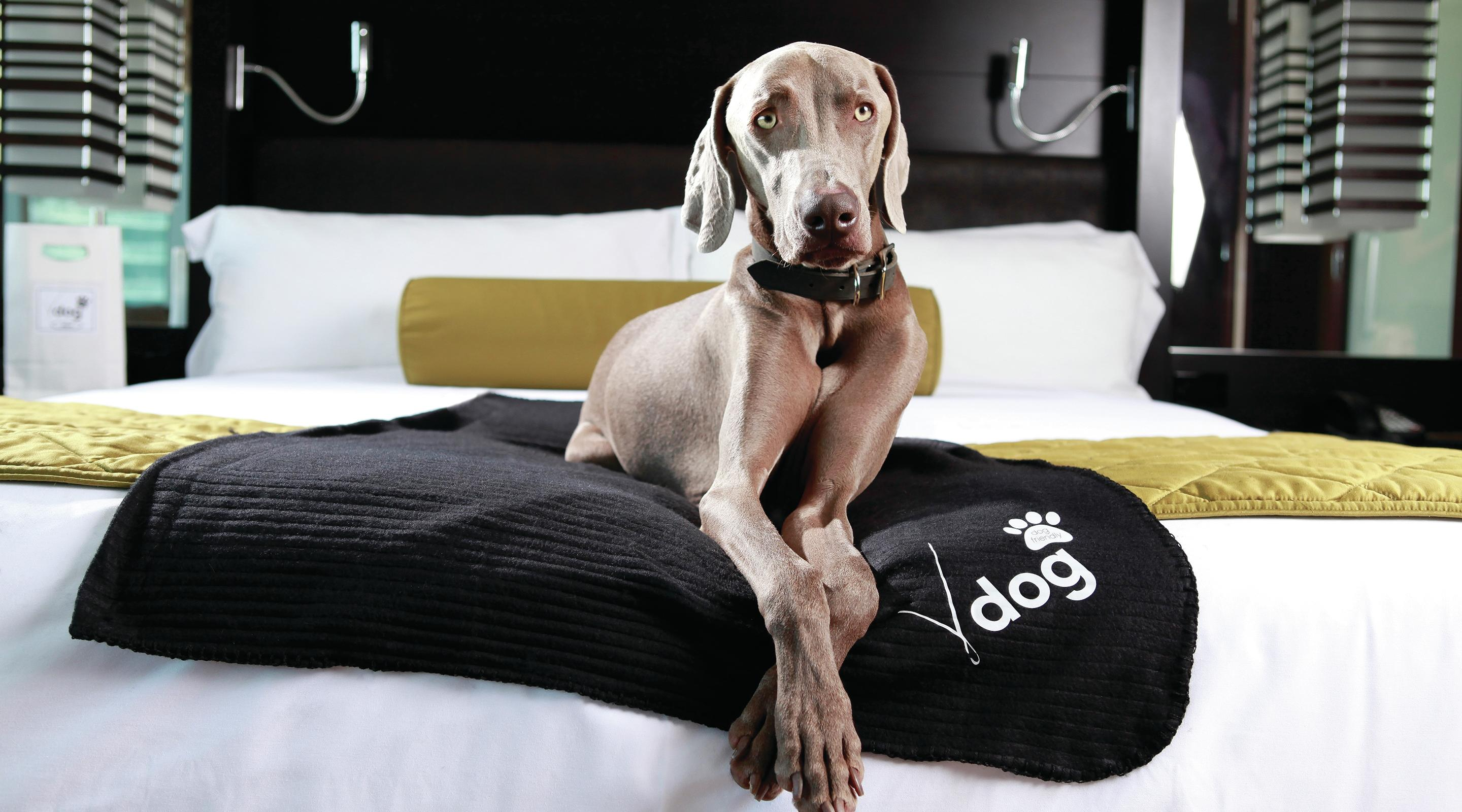 Vdara welcomes your four-legged friend.